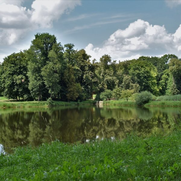 Park aborteum Gołuchów